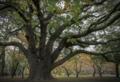京都新聞写真コンテスト 妖精の住む樹