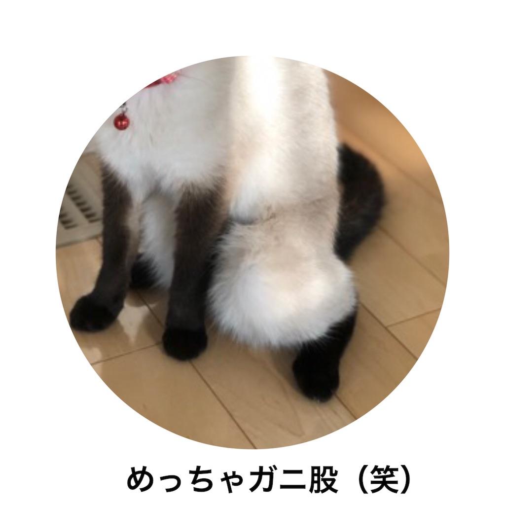 f:id:muu-0316:20190703231453j:plain