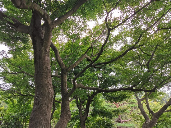 木々の生い茂る森林の様子