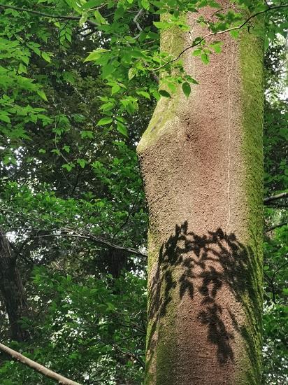 森林の木に映る影