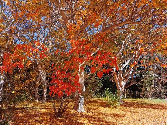 秋の紅葉の森林浴