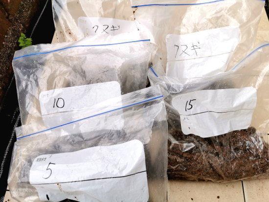 ミニ盆栽へ仕込んだドングリのはいった5つのビニール袋