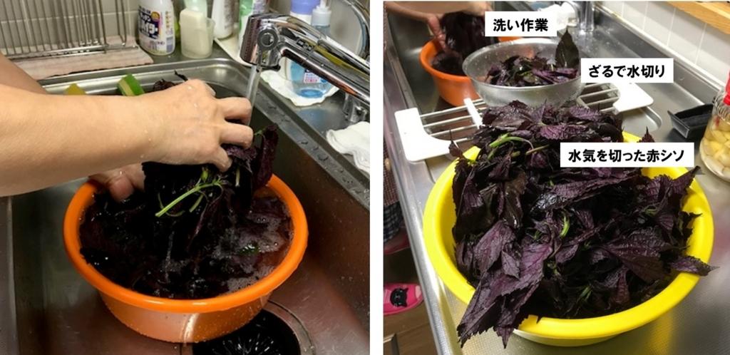 赤紫蘇を洗って水切りする