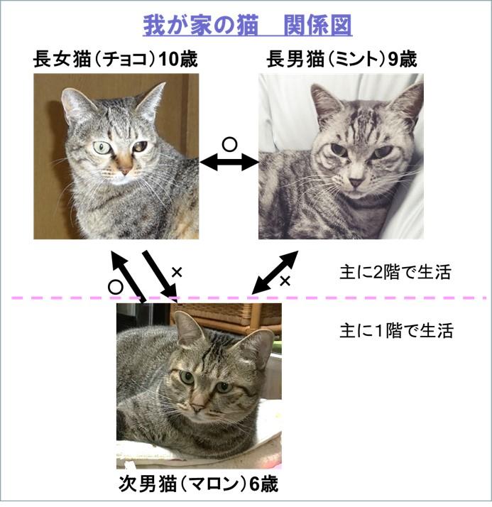 f:id:my-manekineko:20190412222152j:plain
