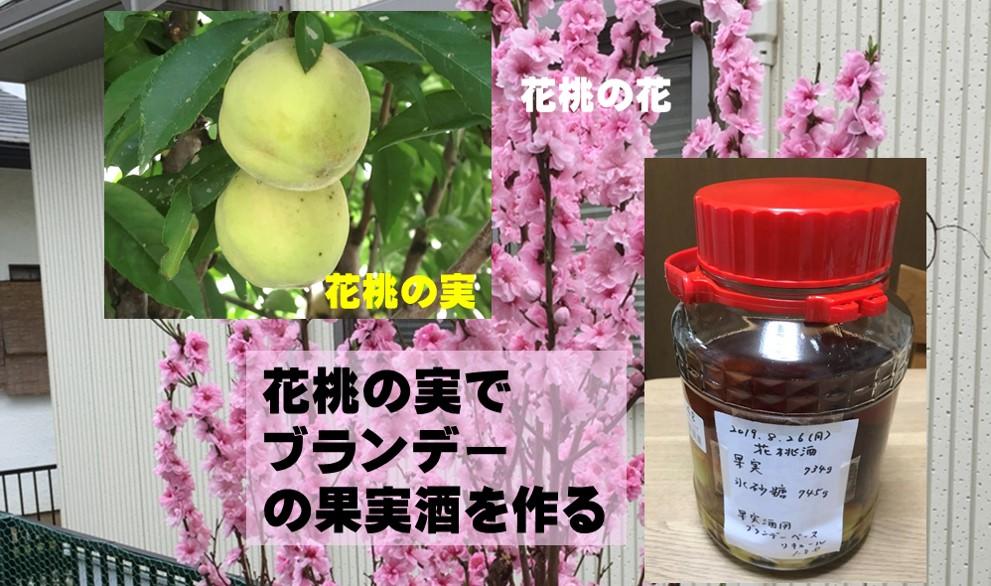 花桃の実をブランデーベースの花桃酒にする