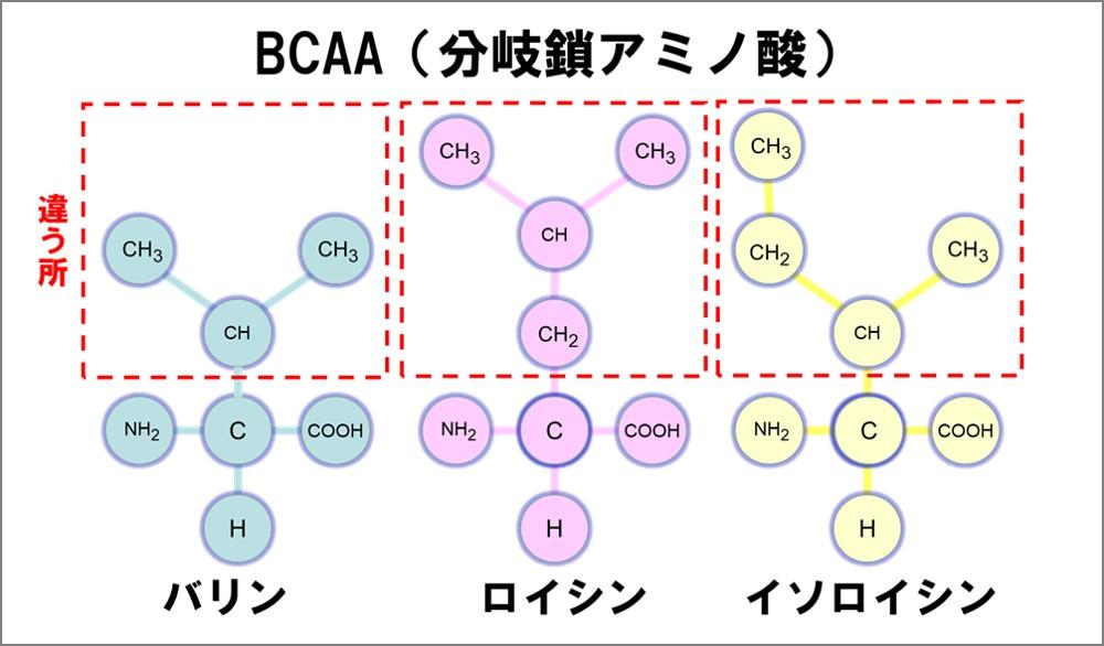 バリン、ロイシン、イソロイシンをBCAAと呼んでいます。筋肉の必須アミノ酸