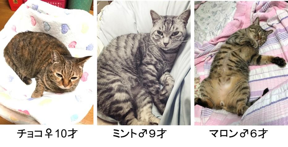 我が家は猫3匹との協同生活