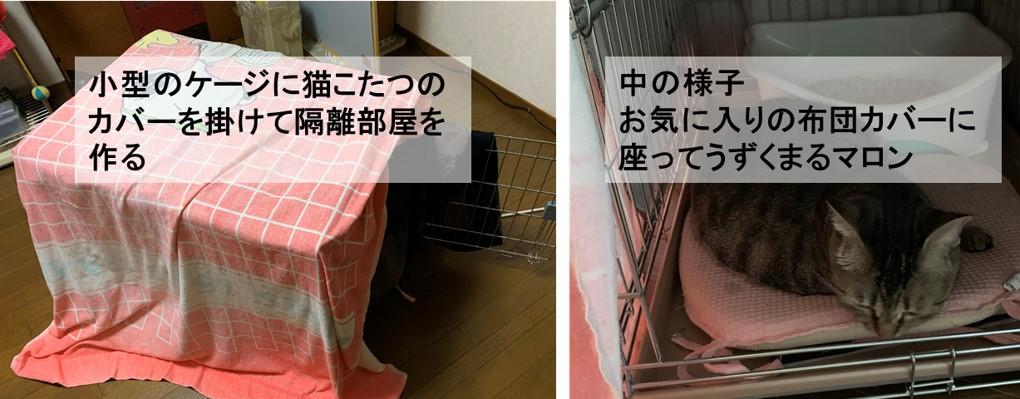 小型のケージで作った隔離部屋の様子-うずくまるマロン