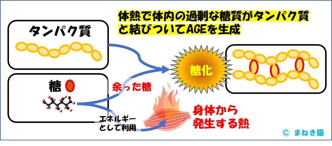体熱で体内の過剰な糖質がタンパク質と結びついてAGEを生成