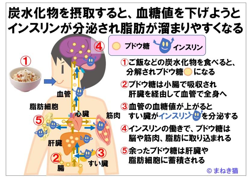 炭水化物を摂取するとインスリンが分泌され脂肪が溜まりやすくなる