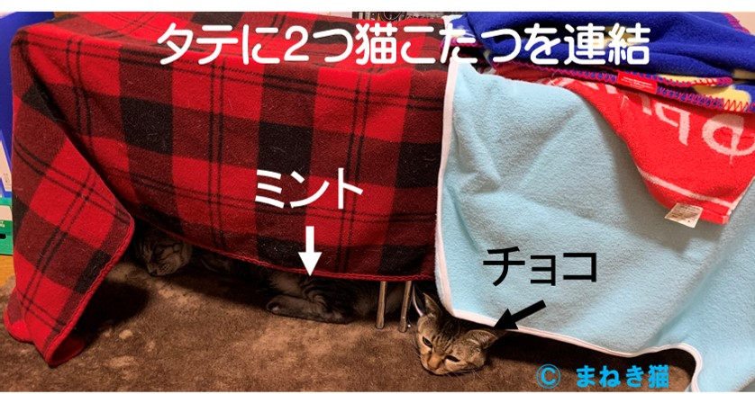 猫こたつを2つタテに連結して2匹用の居場所を作る
