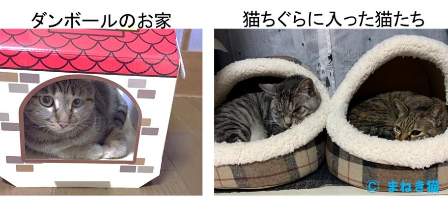 段ボールのお家や猫ちぐらに入った猫たち