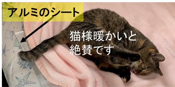 アルミのシート猫さま暖かいと絶賛中