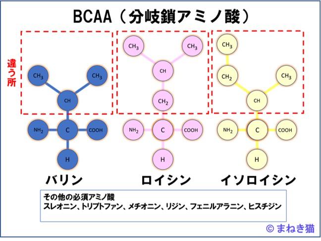 必須アミノ酸BCAAと他の6種類の名