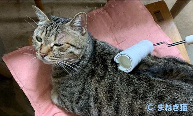猫のマロンがコロコロ中