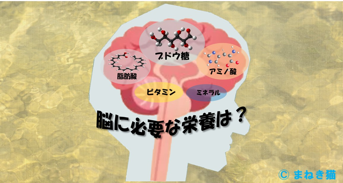 0-表紙-脳に必要な栄養素