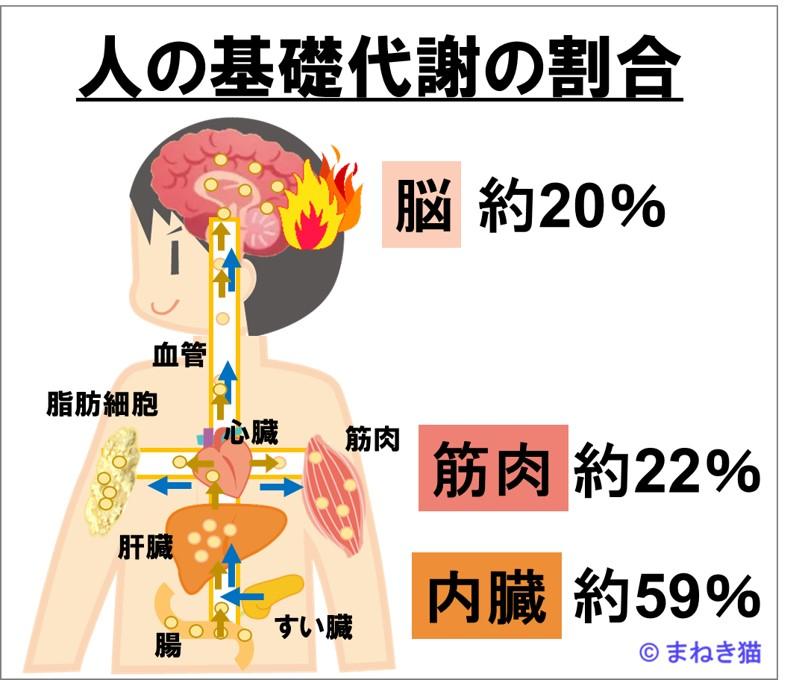 1-2-人の基礎代謝の割合