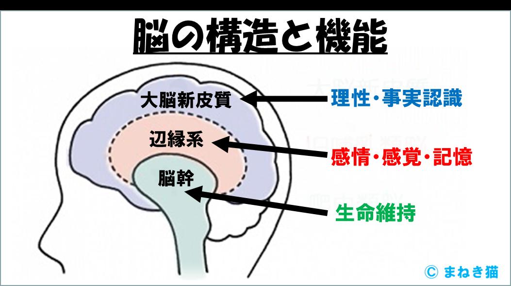1-4-脳の構造と機能