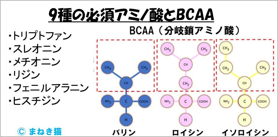 1-A-9種の必須アミノ酸とBCAAの構成