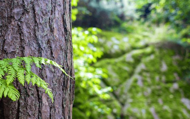 アーシングの木