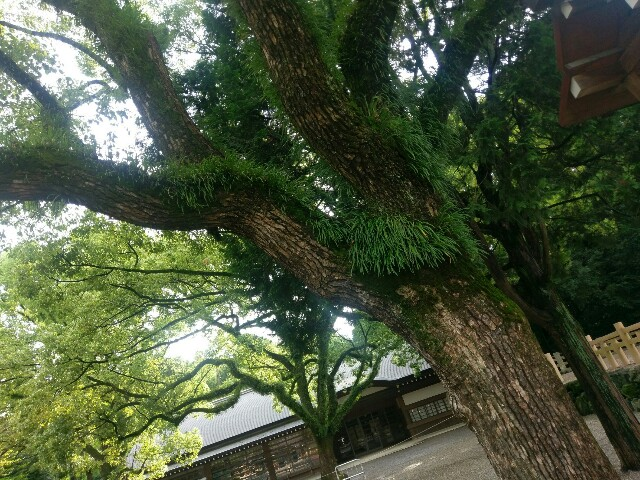 f:id:myadomachi:20160821173935j:plain