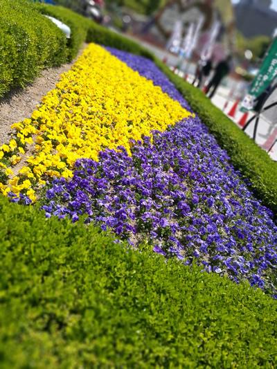 なんかきれいな花