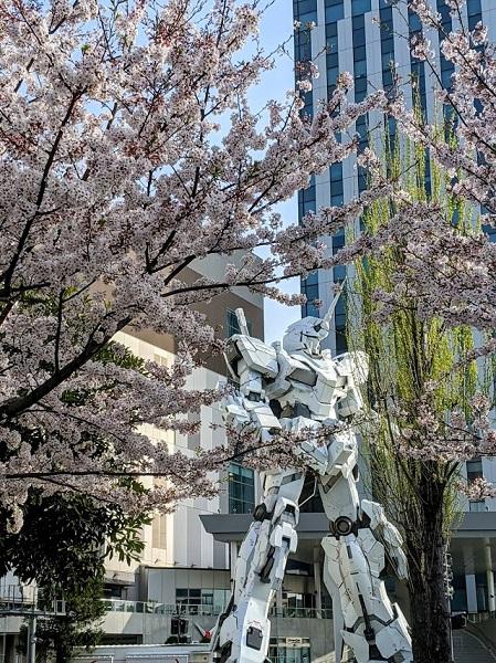 なっちゃんのにこにこブログ 桜
