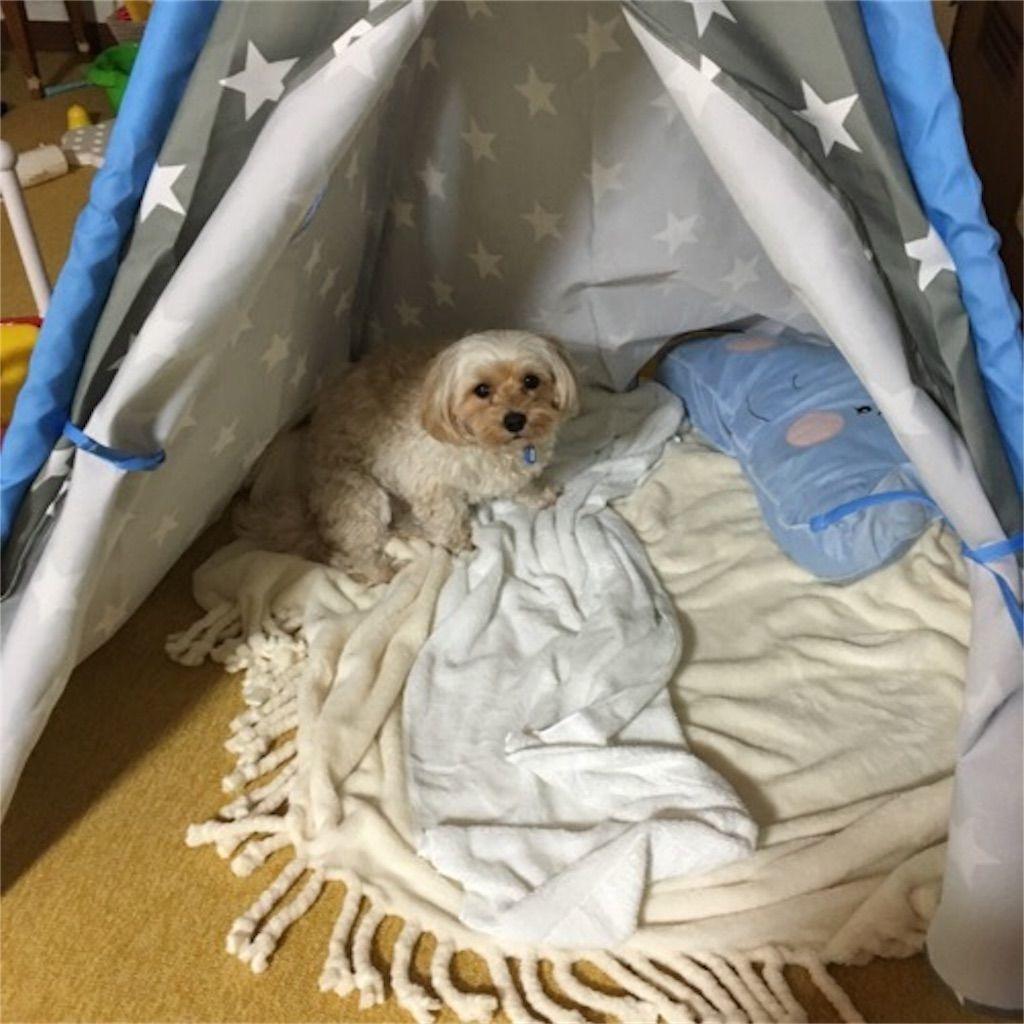 ニトリのキッズテント「ティピーテント」を気に入った犬