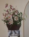 [生け花]ササユリ、ホタルブクロ(会堂の花)