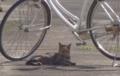 自転車の下にいれば安心。しかし睨みつつ