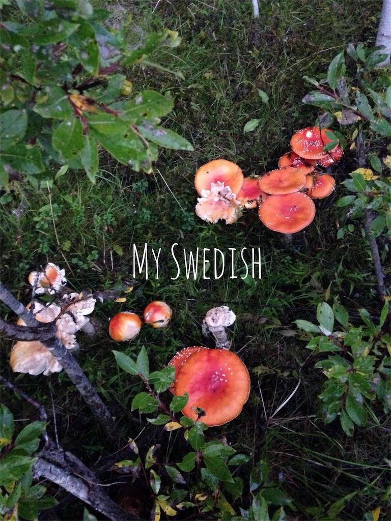 f:id:myswedish:20160830153830j:image