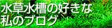 ■水草水槽の好きな私のブログ■