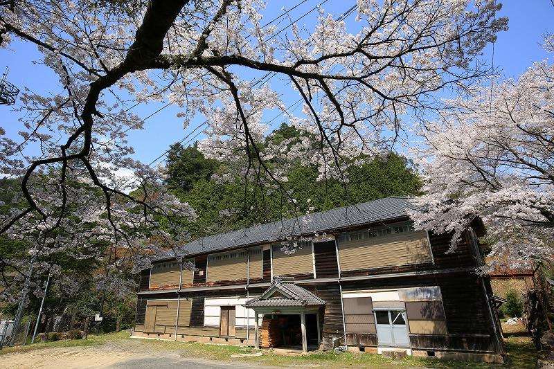 関市上之保船山地区木造校舎桜バック
