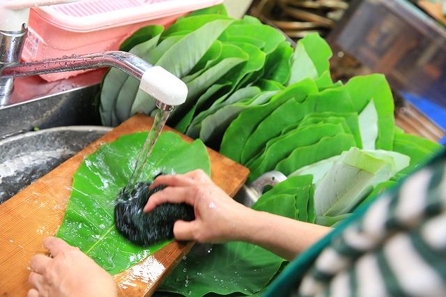 関市上之保で朴葉の葉を洗う
