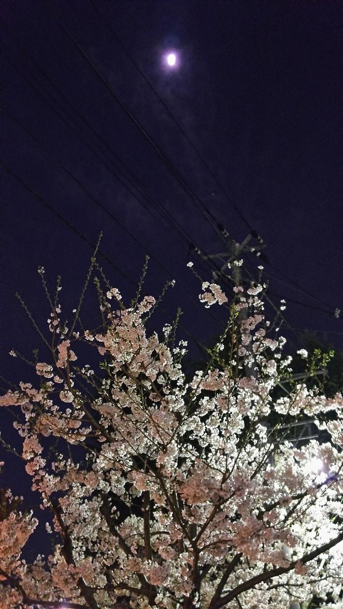 f:id:myuhikaru:20190417220812j:plain