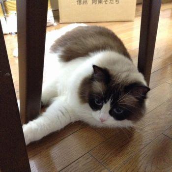 f:id:myukmyuk:20161116225308j:plain