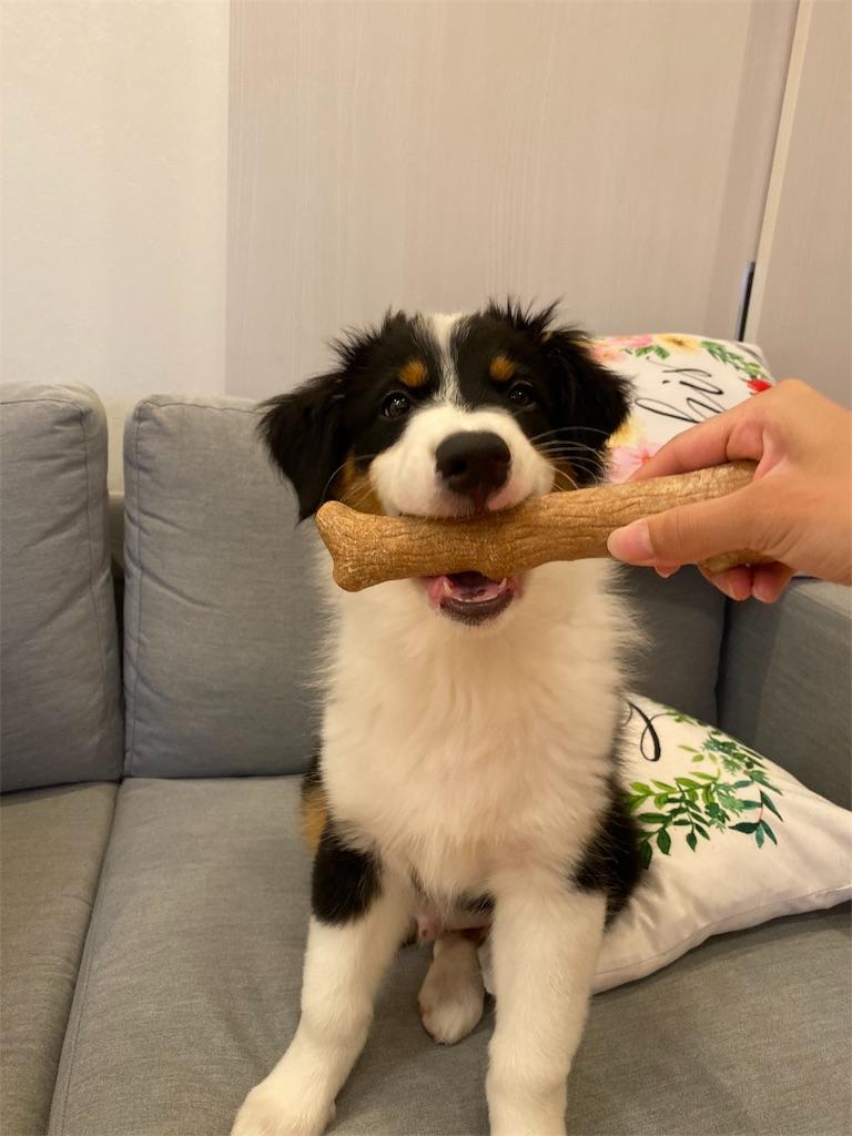 f:id:n-dogs:20191003214235j:image