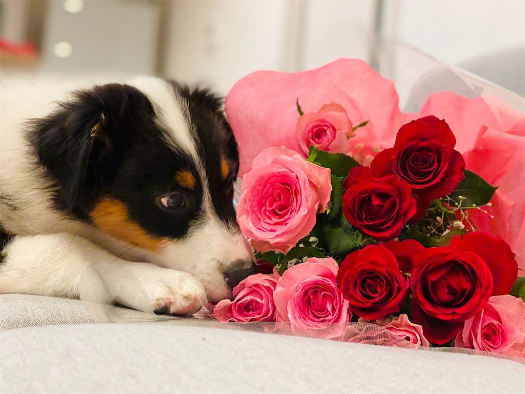 f:id:n-dogs:20191005163712j:image