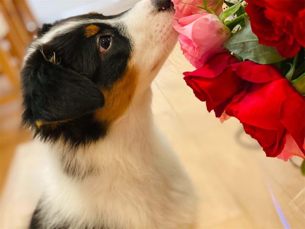 f:id:n-dogs:20191005163716j:image