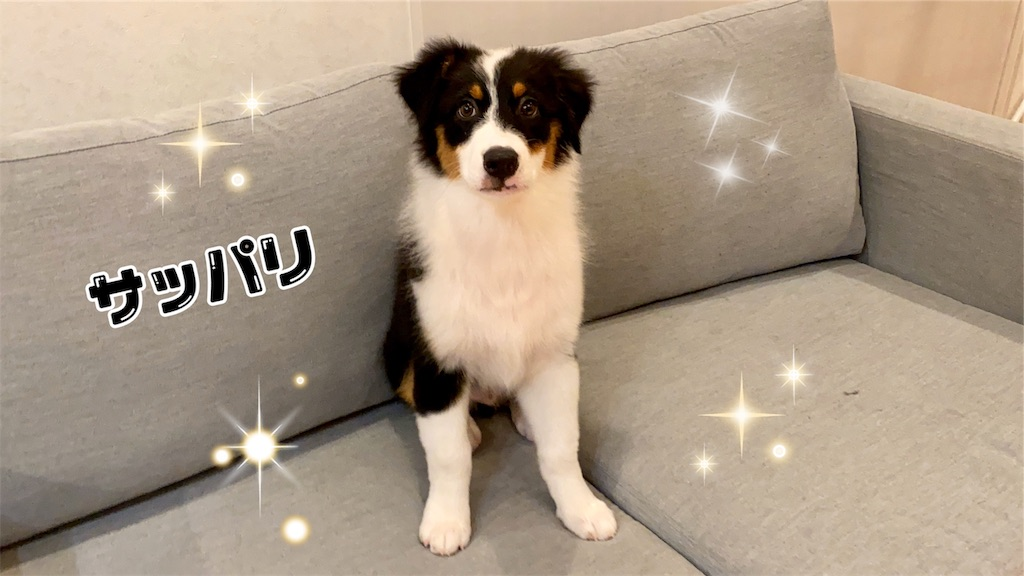 f:id:n-dogs:20191012112801j:image
