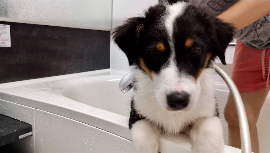 f:id:n-dogs:20191012112842j:image