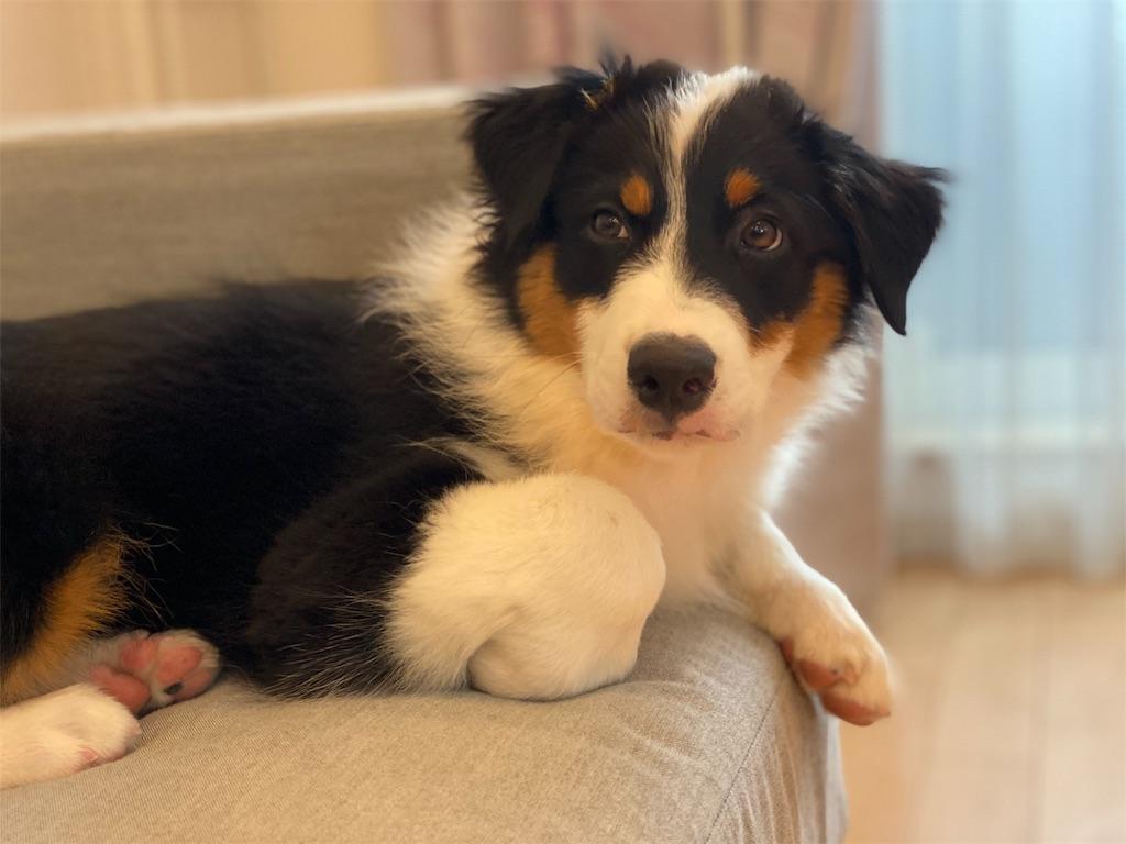 f:id:n-dogs:20191012114610j:image