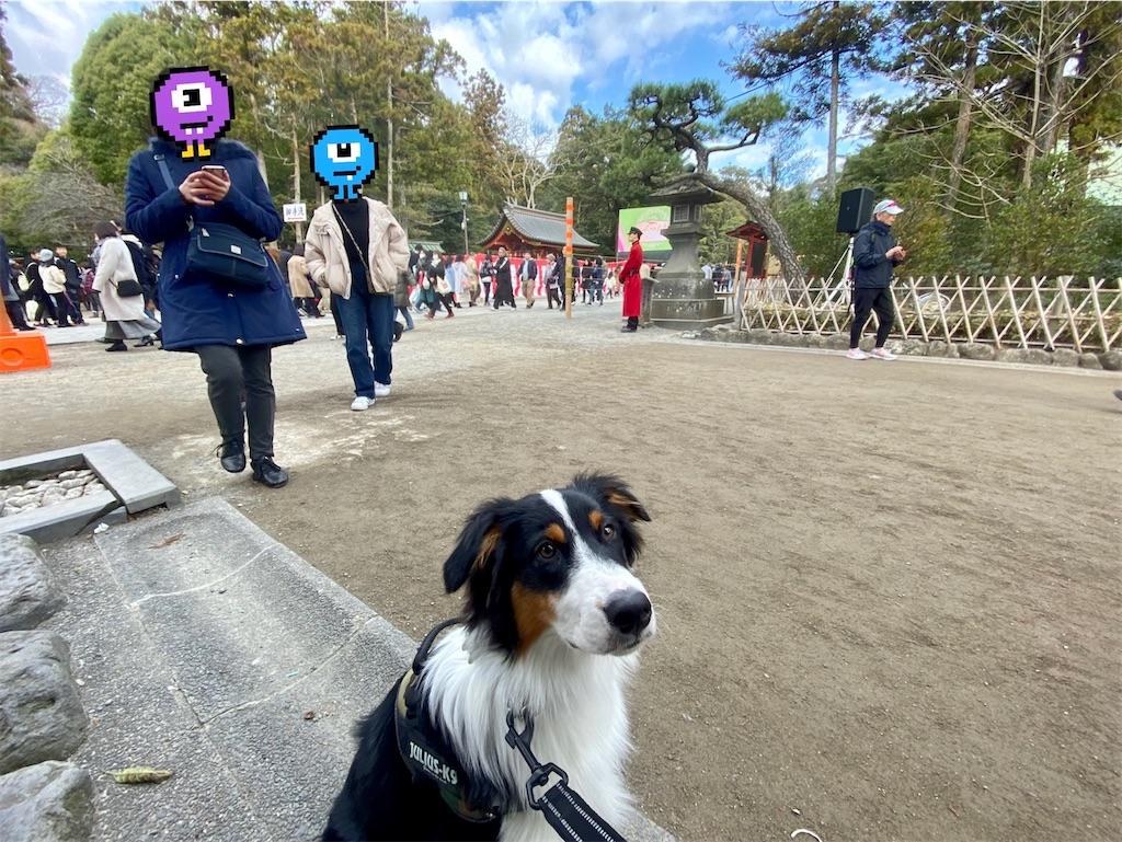 f:id:n-dogs:20200104221437j:image