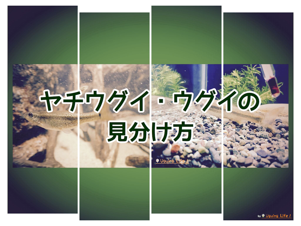 f:id:n-m-c-9311:20200129184315p:plain