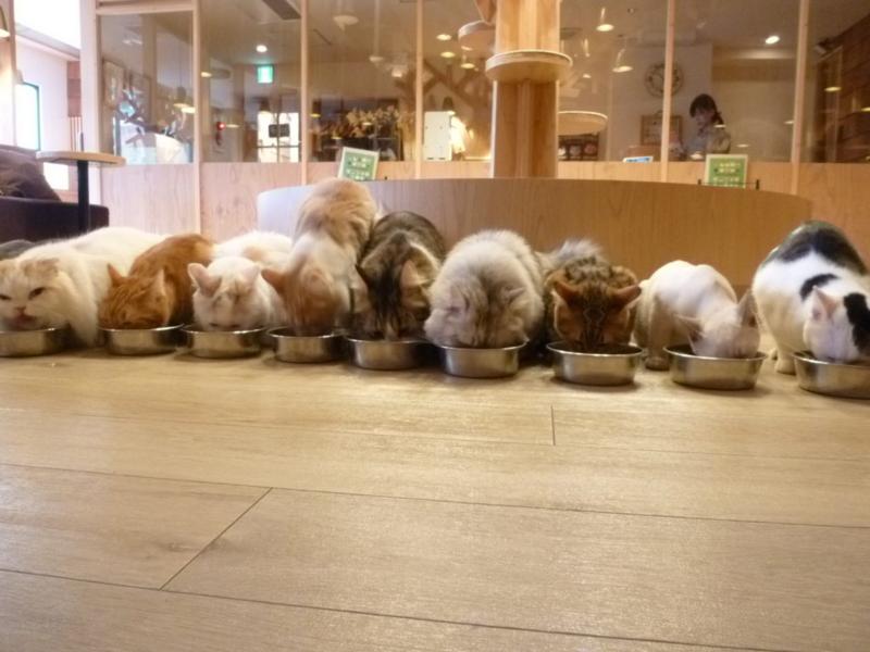 猫ご飯タイム