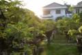 [盆栽] 朝日照らす
