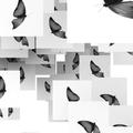 蝶(モノクロ)