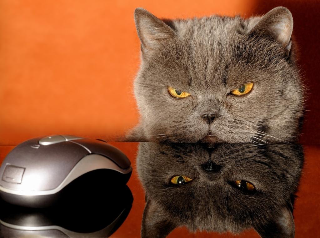 ネズミは猫に追いかけられる