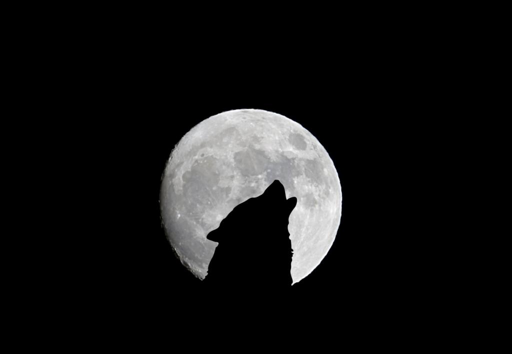 月に吠える人狼