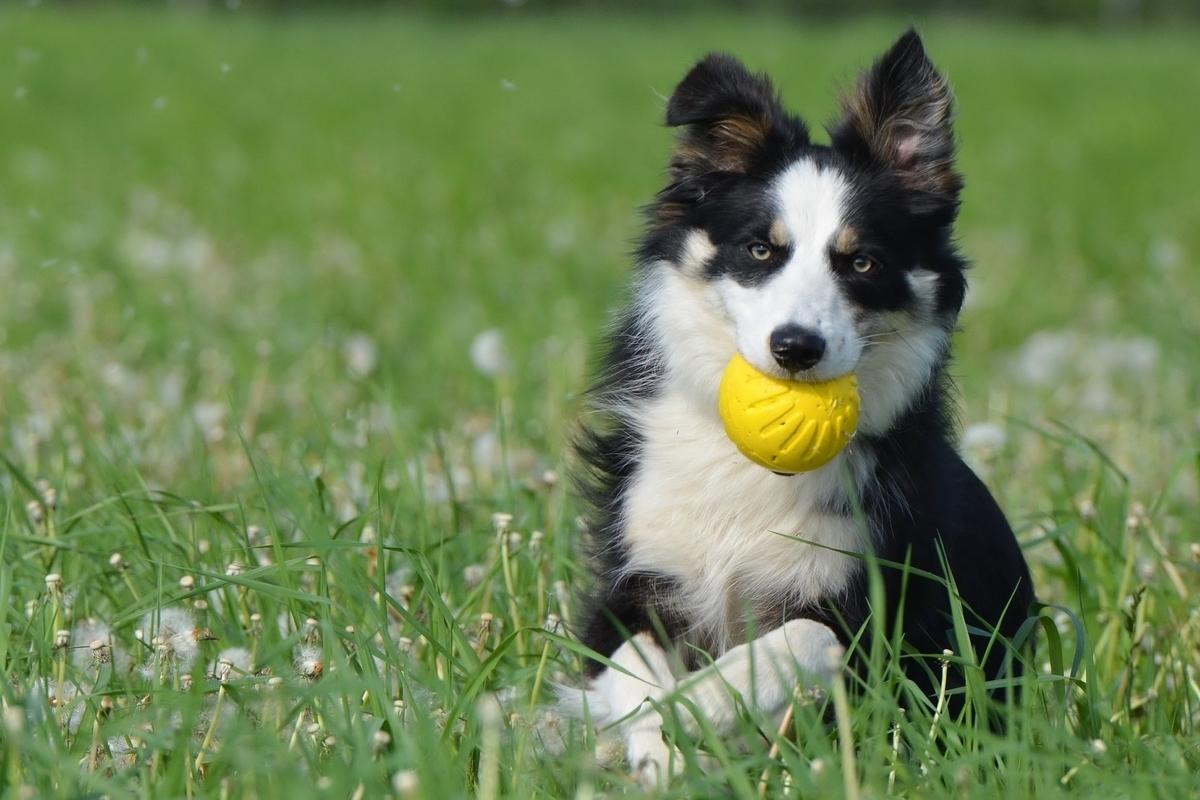 犬のすばらしさを表す英語表現